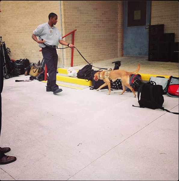 The bomb-sniffing dog makes sure that all of our stuff was okay